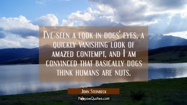 I've seen a look in dogs' eyes a quickly vanishing look of amazed contempt and I am convinced that John Steinbeck Quotes