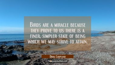 Birds are a miracle because they prove to us there is a finer simpler state of being which we may s Doug Coupland Quotes