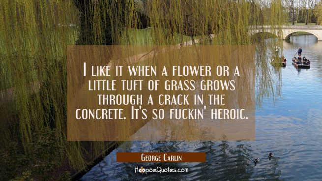 I like it when a flower or a little tuft of grass grows through a crack in the concrete. It's so fu