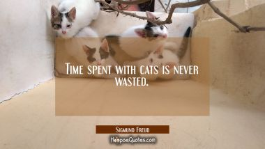 Time spent with cats is never wasted. Sigmund Freud Quotes