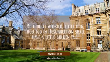 Be thou comforted little dog Thou too in Resurrection shall have a little golden tail. Martin Luther Quotes