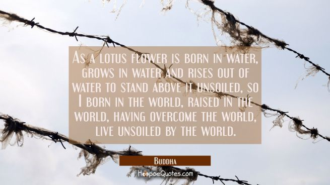 As a lotus flower is born in water grows in water and rises out of water to stand above it unsoiled