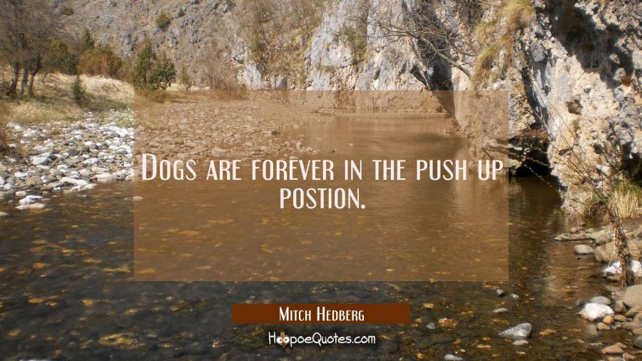 Dogs are forever in the push up postion. Mitch Hedberg Quotes