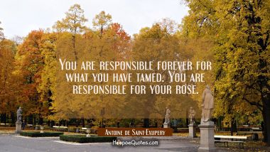 You are responsible forever for what you have tamed. You are responsible for your rose.