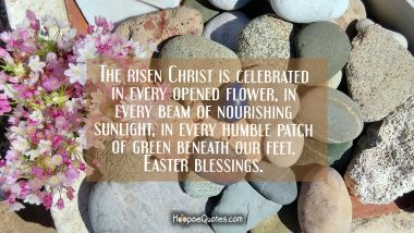 The risen Christ is celebrated in every opened flower, in every beam of nourishing sunlight, in every humble patch of green beneath our feet. Easter blessings.