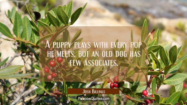 A puppy plays with every pup he meets but an old dog has few associates.