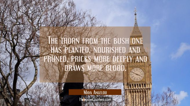 The thorn from the bush one has planted nourished and pruned pricks more deeply and draws more bloo