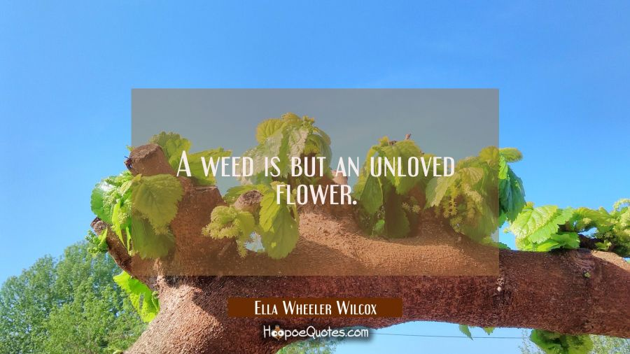 A weed is but an unloved flower. Ella Wheeler Wilcox Quotes