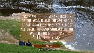 Ants are the dominant insects of the world and they've had a great impact on habitats almost all ov