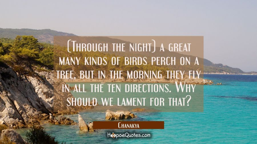 (Through the night) a great many kinds of birds perch on a tree but in the morning they fly in all Chanakya Quotes