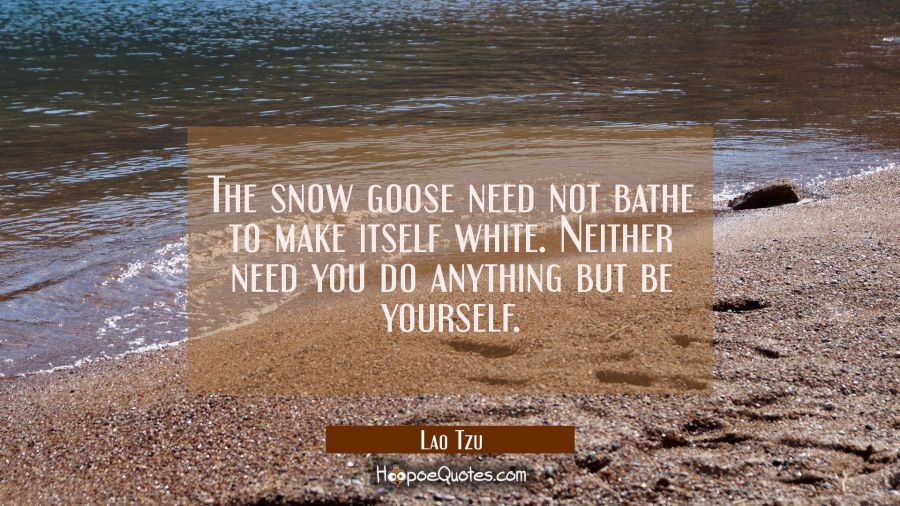 the snow goose need not bathe