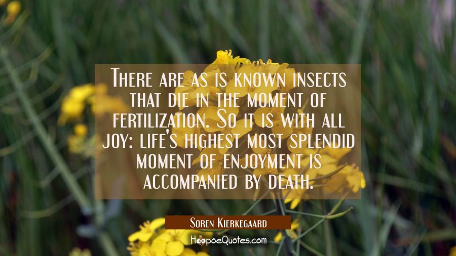 There are as is known insects that die in the moment of fertilization. So it is with all joy: life' Soren Kierkegaard Quotes