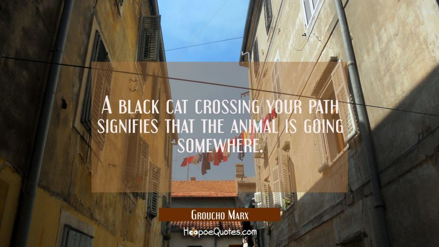 A black cat crossing your path signifies that the animal is going somewhere. Groucho Marx Quotes