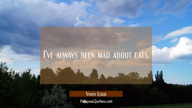 I've always been mad about cats.