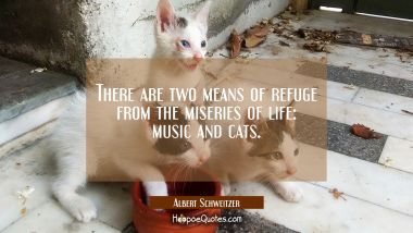 There are two means of refuge from the miseries of life: music and cats. Albert Schweitzer Quotes