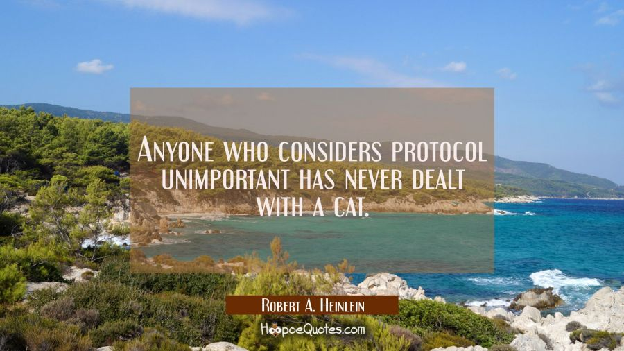 Anyone who considers protocol unimportant has never dealt with a cat.
