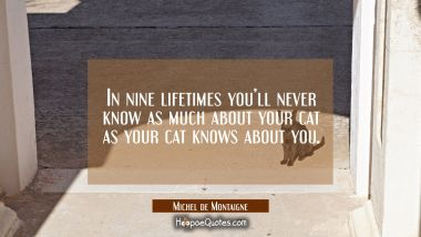 In nine lifetimes you'll never know as much about your cat as your cat knows about you. Michel de Montaigne Quotes