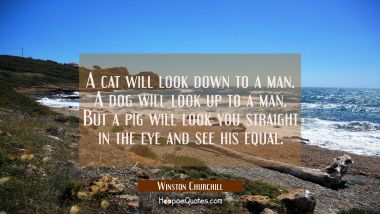 A cat will look down to a man. A dog will look up to a man. But a pig will look you straight in the Winston Churchill Quotes