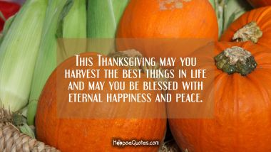 This Thanksgiving may you harvest the best things in life and may you be blessed with eternal happiness and peace. Thanksgiving Quotes