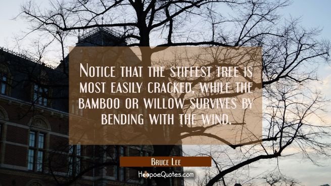 Notice that the stiffest tree is most easily cracked while the bamboo or willow survives by bending