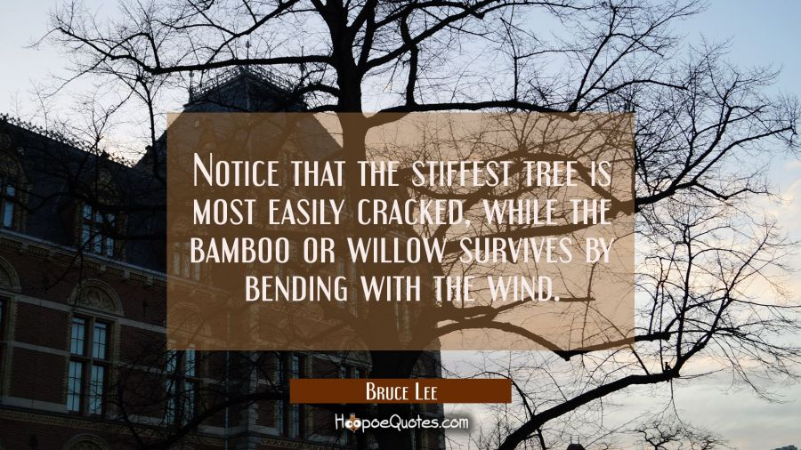 Notice that the stiffest tree is most easily cracked while the bamboo or willow survives by bending Bruce Lee Quotes