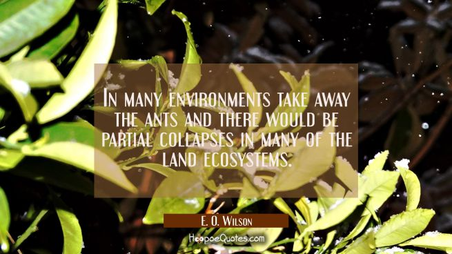 In many environments take away the ants and there would be partial collapses in many of the land ec