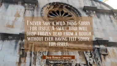 I never saw a wild thing sorry for itself. A small bird will drop frozen dead from a bough without