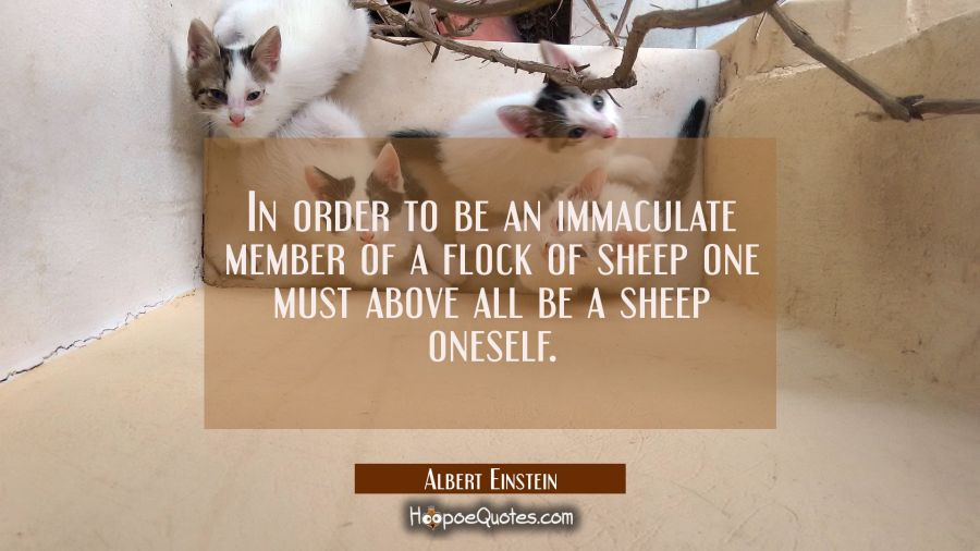 In order to be an immaculate member of a flock of sheep one must above all be a sheep oneself. Albert Einstein Quotes