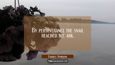 By perseverance the snail reached the ark.