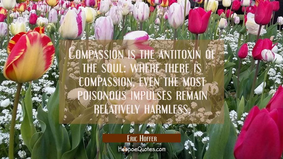 Compassion is the antitoxin of the soul: where there is compassion even the most poisonous impulses Eric Hoffer Quotes