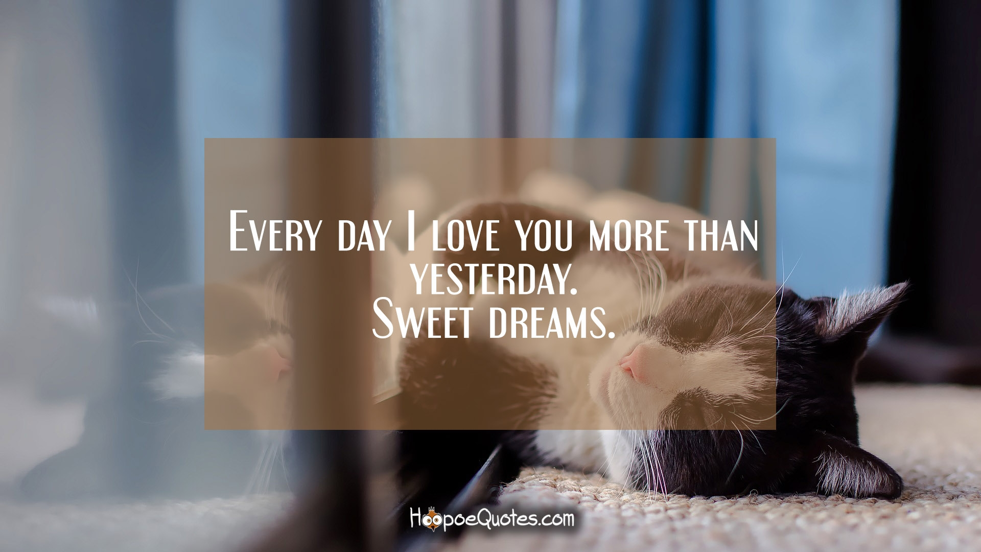 Quotes I Love You More Every Day: Every Day I Love You More Than Yesterday. Sweet Dreams